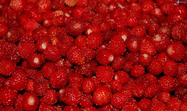 Mucho sobre la fresa… y si es de Aranjuez, mucho más.