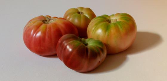 El tomate, breve historia