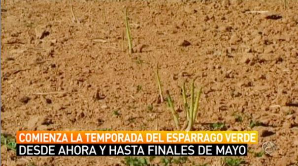 Antena 3 en la huerta de Aranjuez