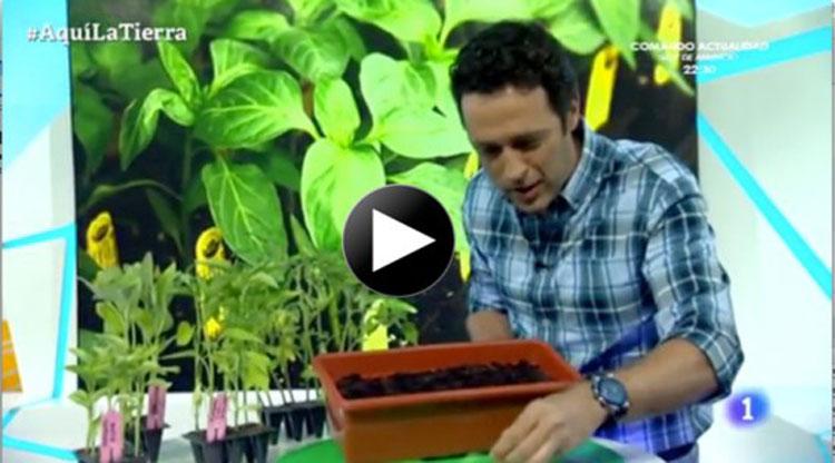 """Plantando pimiento de Aranjuez en """"Aquí la Tierra"""""""