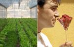 Homenaje vegetal
