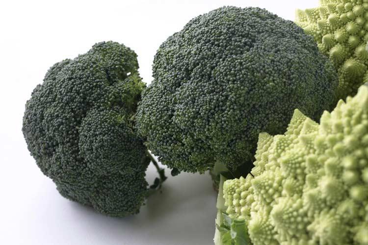 Brócoli tradicional