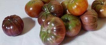 tomate_header_column